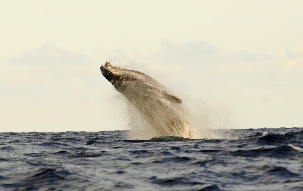5 Activities - Whalewatching 1.jpg