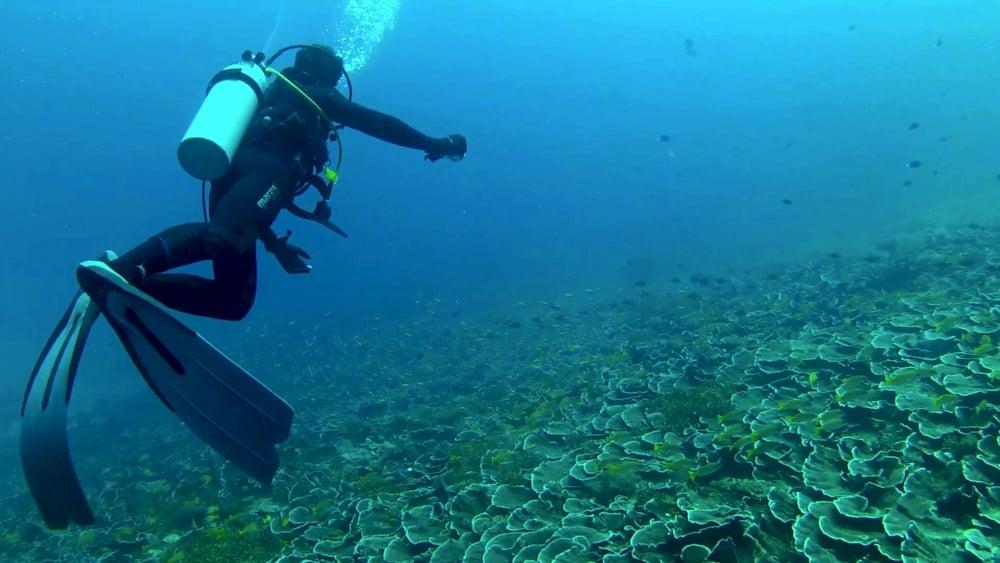 8 Underwater 4.jpg