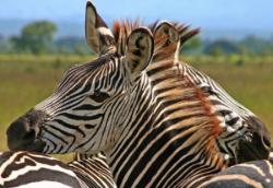 4 Days - Northern Discovery: A speedy tour of the important sites of Ngorongoro, Serengeti and Lake Manyara
