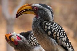 6 Days - Serengeti Supreme:Our most popular tour of Ngorongoro, Serengeti and Lake Manyara