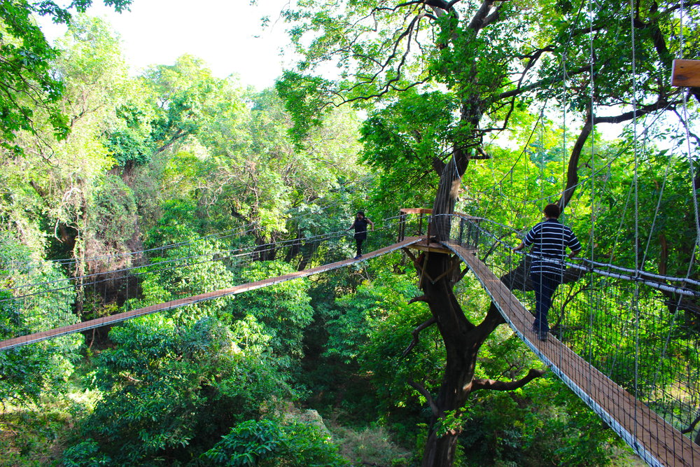 treetop_walkway_lake_manyara_takims_holidays_3