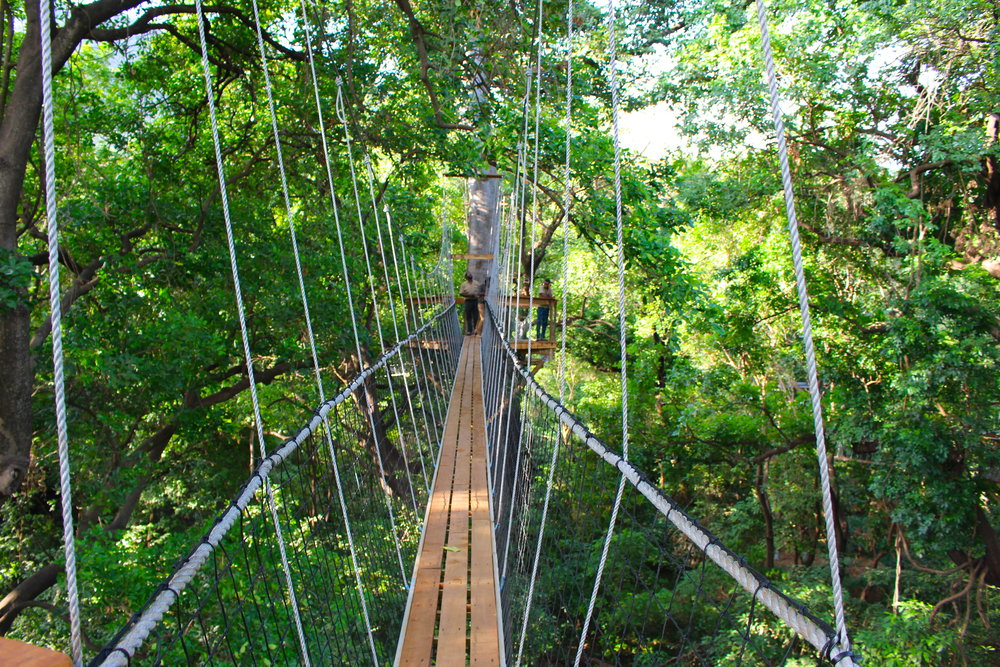 treetop_walkway_lake_manyara_takims_holidays_5