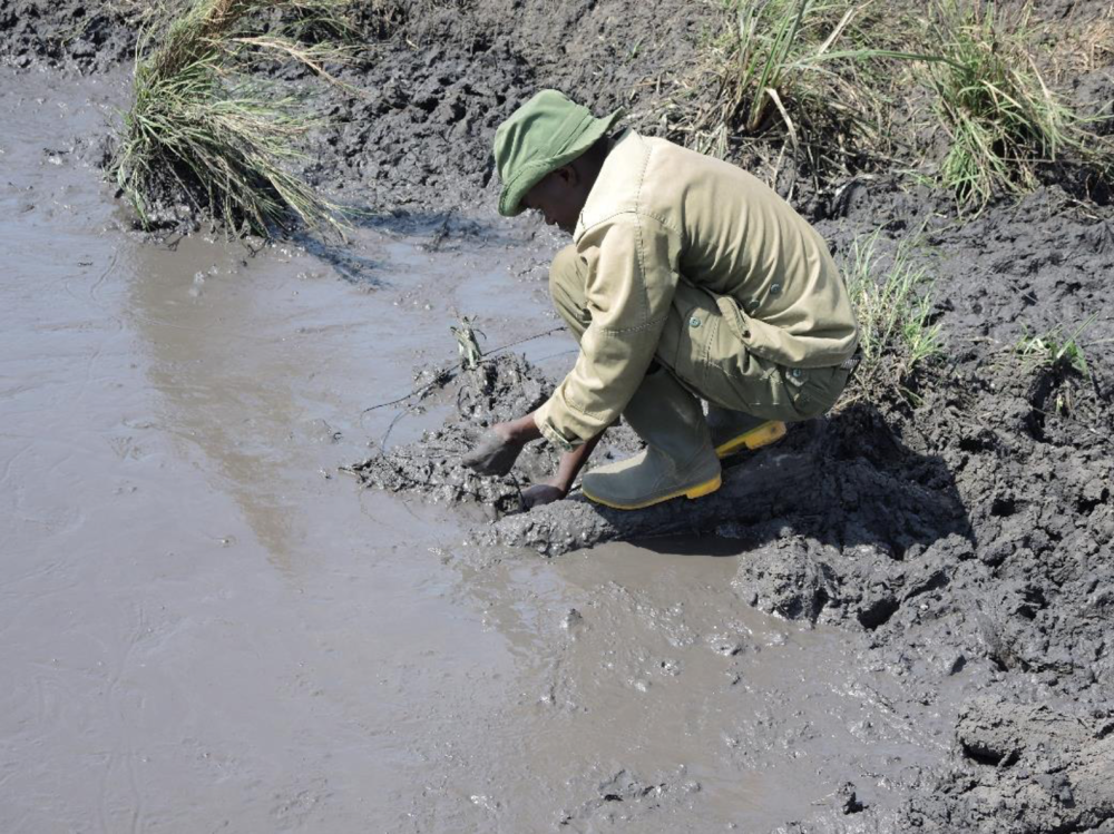 Removing a snare that was set by poachers by a waterhole.