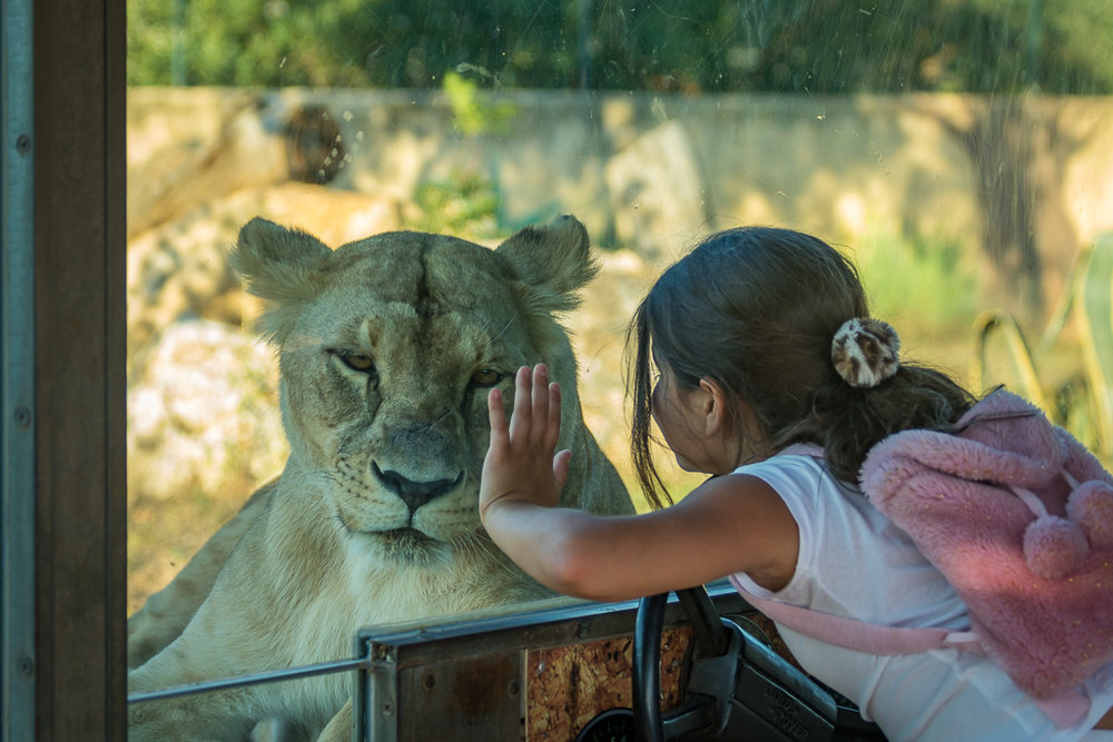 Girl and lion.jpg