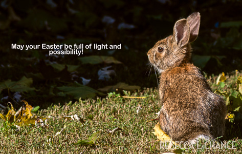 Backyard Bunny. (c) Rebecca LaChance, 2014
