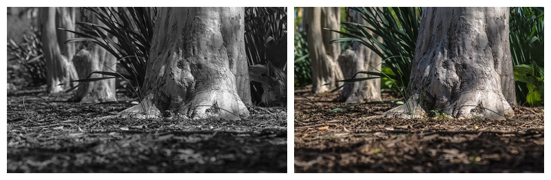 "Left - the monochrome view as seen in the review window.  Right - the full color version from the raw files. ""On the ground"" (c) Rebecca LaChance, 2015. Washington, D.C."