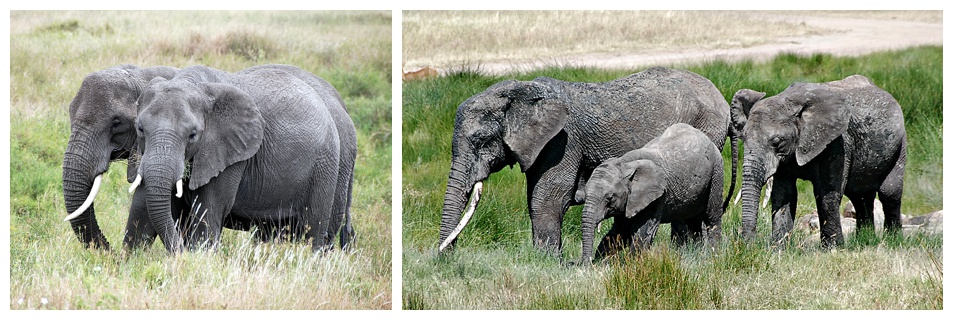 Both photos (c) Bette Brody, 2105.  Serengeti National Park. Used with Permission