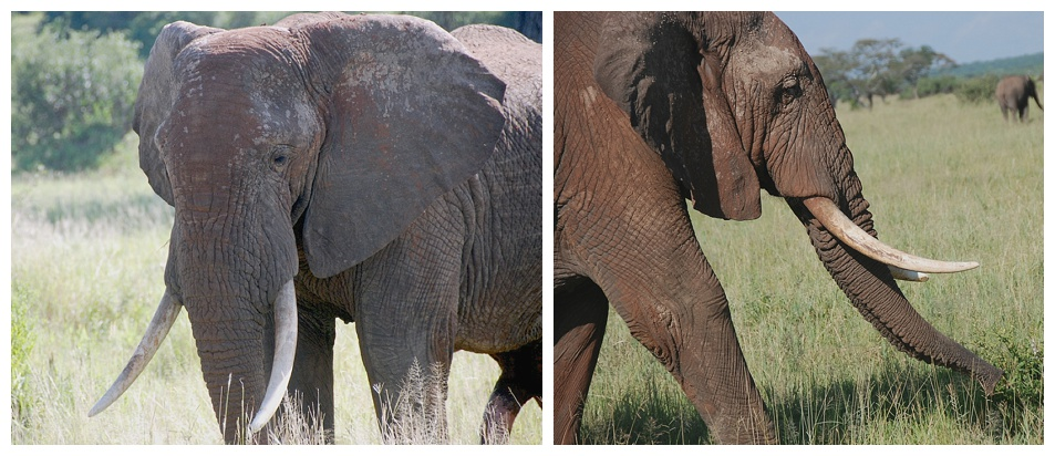 Both photos (c) Bette Brody, 2105. Tarangire National Park. Used with permission.