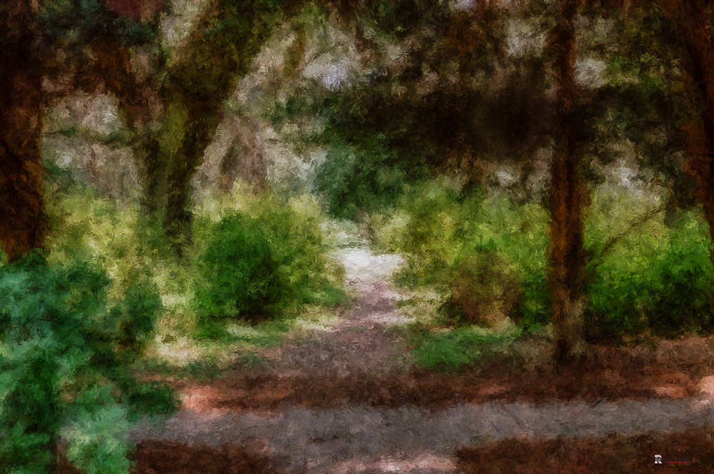 """The path into the sun"" (c) Rebecca LaChance, 2015. Eden Gardens State Park, Santa Rosa Beach, FL."