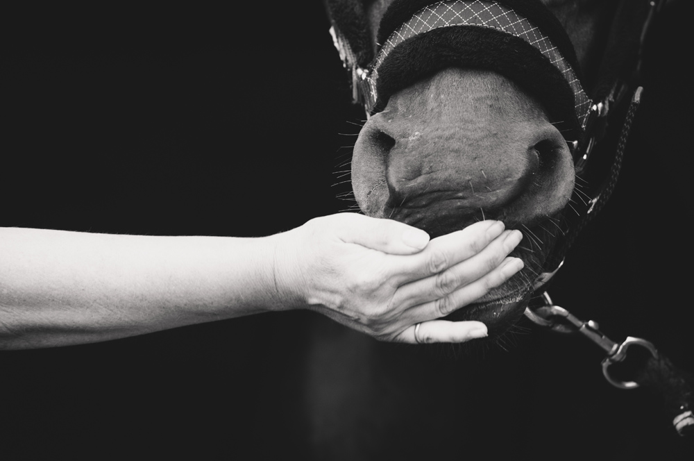 I've photographed so many horses and owners and I've loved every single shoot but this image always stays in my mind because it both hides and reveals so much at the same time. This is the emotional connection that I look for in my work.