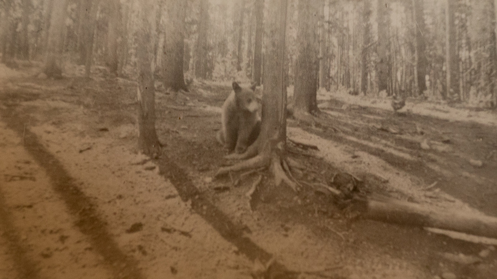 I don't know the story of this bear cub...but I think it became a camp pet. There is another photo of the cub chained to a tree with a very large link chain.  Oh, that was sad...