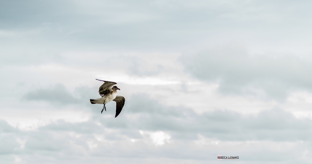 "We can find beauty even in the roughest conditions. Sometimes, it just takes us a minute or two to consider that beauty might exist.  The winds were so fierce, the gulls were all flying with legs down - I assume for stabilization.   ""Air Dancing"" (c) Rebecca LaChance, 2016. Panama City Beach, FL."