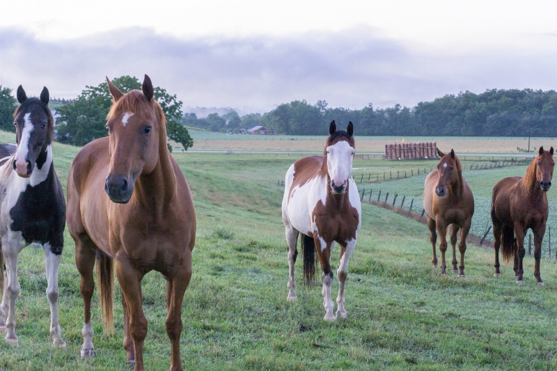 "Sometimes, I make new friends when I'm out and about.  The sun wasn't due to rise for another 14 minutes.  ""Horse Friends"" (c) Rebecca LaChance, 2015, Thurmont, MD."