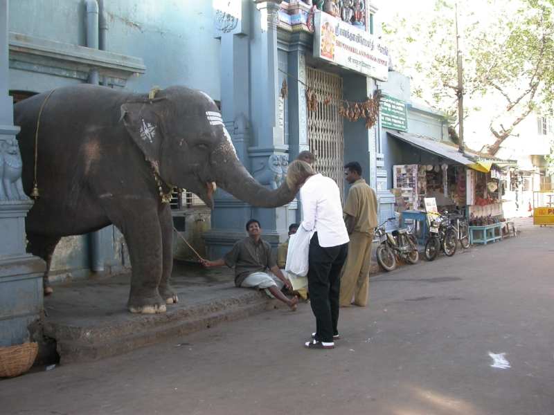 Lakshmi the elephant blessing me in Pondicherry, India. (c) Rebecca LaChance, 2001