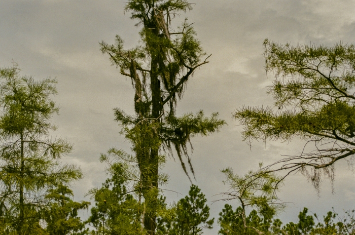 "The sky was heavy, as was the air, but we trudged along, the good troopers that we are. ""Cypress Sky"" (c) Rebecca LaChance, 2015. Conservancy Park, Panama City Beach, FL."