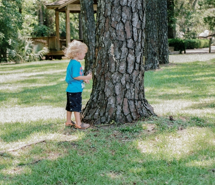 "He was enthralled by the bark on the tree. ""Little boy curious"" (c) Rebecca LaChance, 2015 (film). Wesley Estate. Eden Gardens State Park, Point Washington, FL."