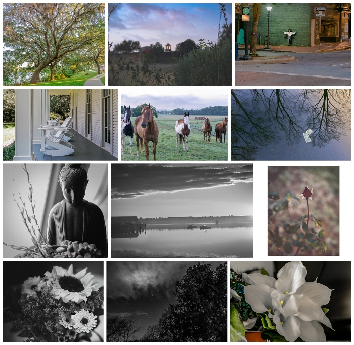 Some of the many images from 2015.  (c) Rebecca LaChance, 2015