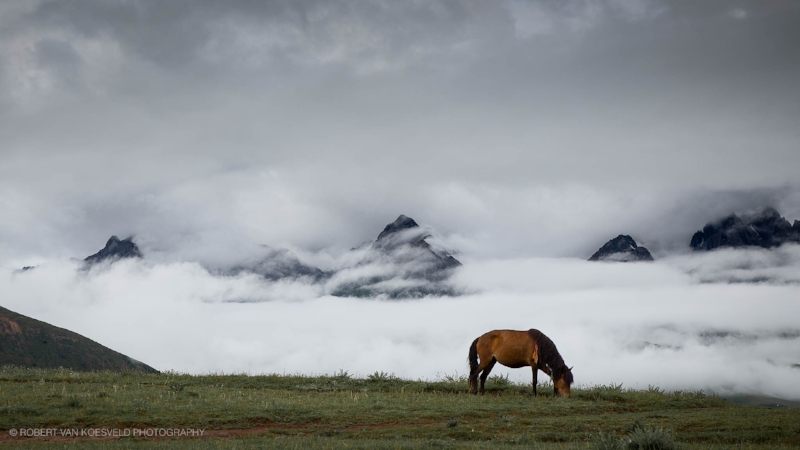 Sky Horse, Tibetan Plateau.  The best images often come as a sort of grace; first you need to be there and ready but then its down to a kind of luck. This was a place I was camped at so there was time for the weather and light to play and change. Then I just needed to practice some horse whispering so he didn't turn.