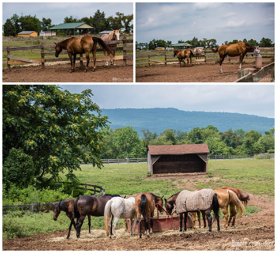 "All of these lovely souls were rescued from kill pens.  They are living out their days in love, care, and ease. ""The Lucky Ones"" (c) Rebecca LaChance, 2017, Thurmont. MD"