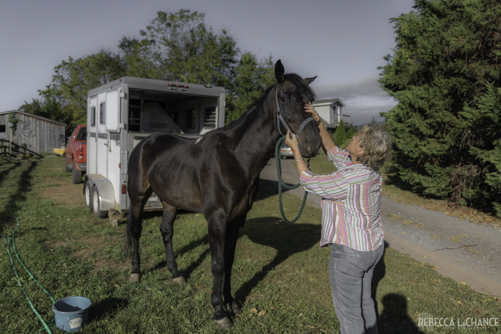 "Say ""hello"" to Bob! This was Bob's first day of his new life.  He is living with  Rebecca Pearl  and her four other rescue horses. You did this! You saved his life. Here's the story of how you saved Bob."