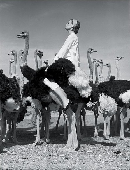 maliciousglamour :      Wenda and the Ostriches, South Africa, Vogue, 1954  Photographer: Norman Parkinson Model: Wenda Parkinson