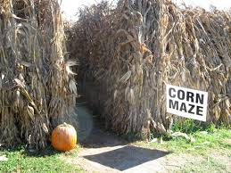 Tom's Maze and Pumpkin Farm