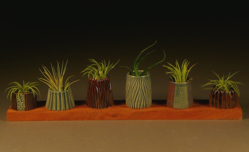 Air plants in pots