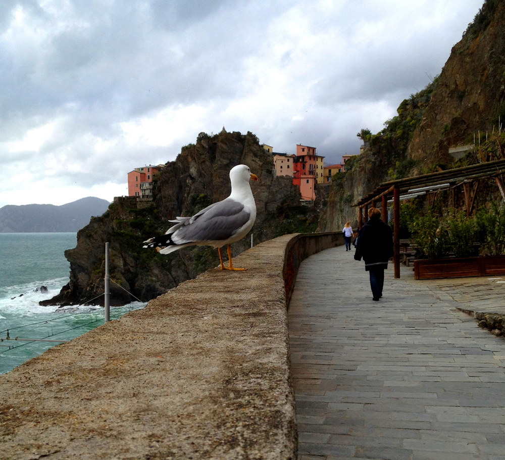 The walk from Riomaggiore to Manarola