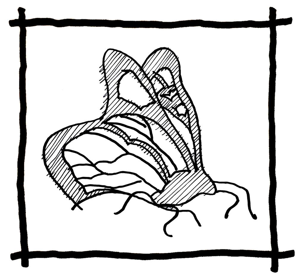 Butterfly Sketch - Steve Ramos