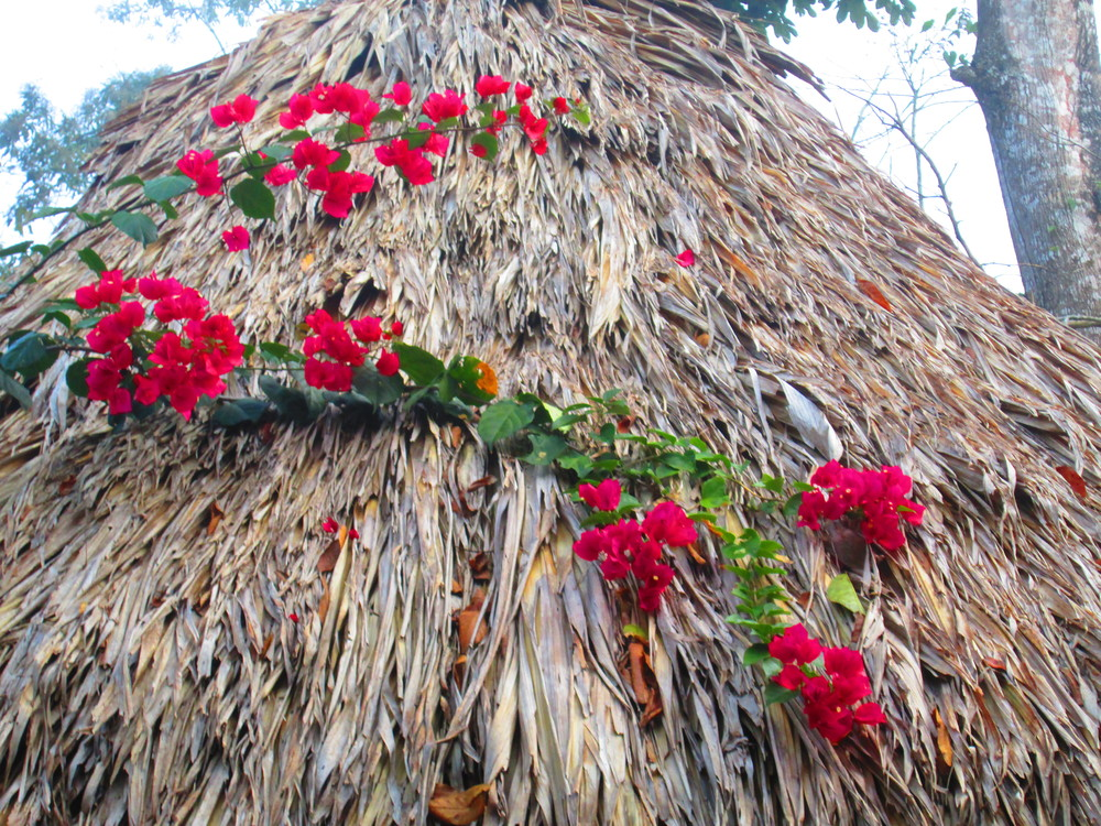 Flowers on Thatch 2.JPG