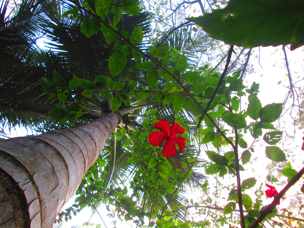 Palm tree and flower.JPG