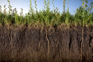 Photo credit - Soil Carbon Regeneration