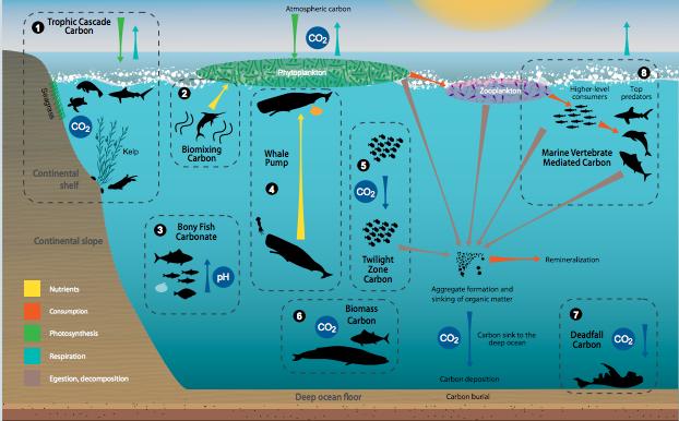 Source: UNEP Fish Carbon Report