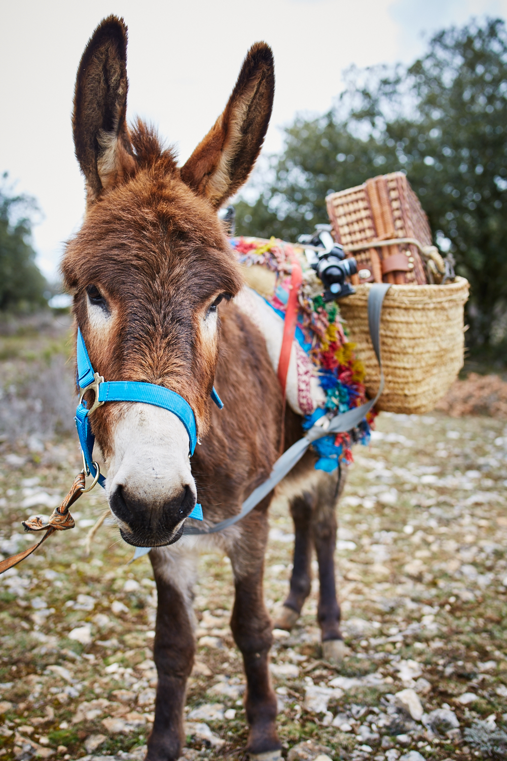 Spanish Burro named Momo