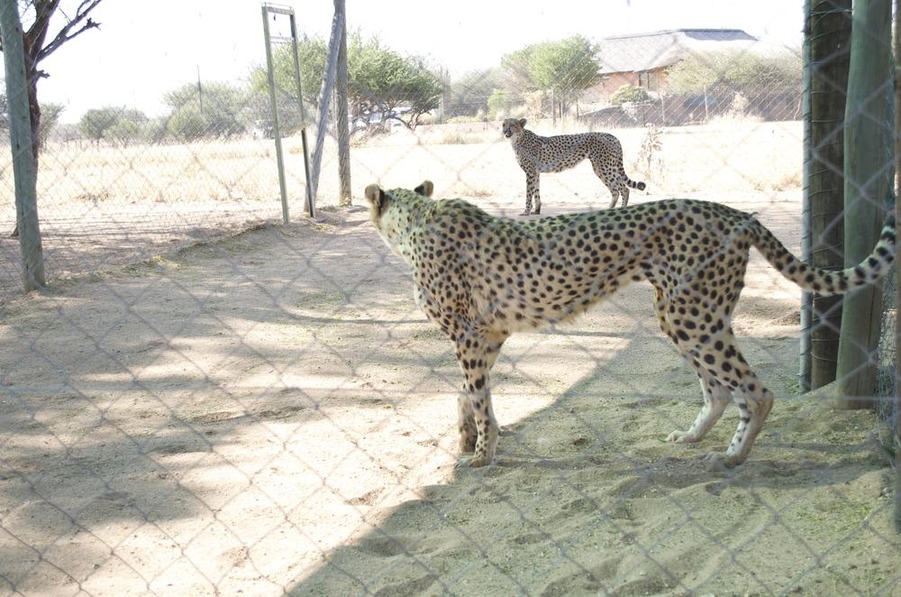 Namibia II | Pale Yellow