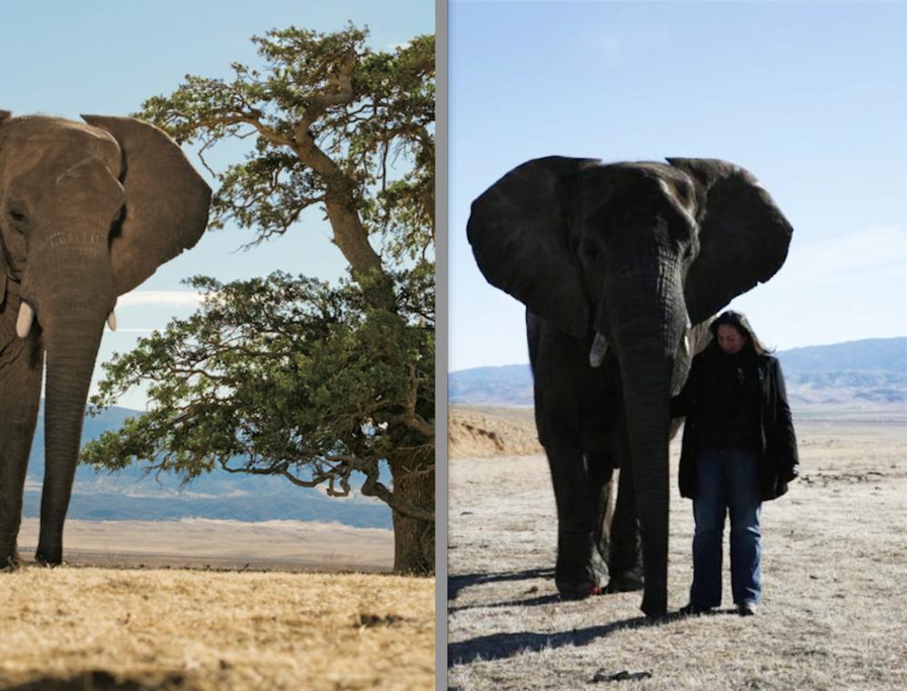 ToniBashinelli_Elephants.jpg