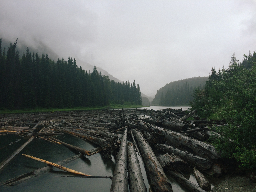 Log jam at Duffy Lake, Pemberton, BC