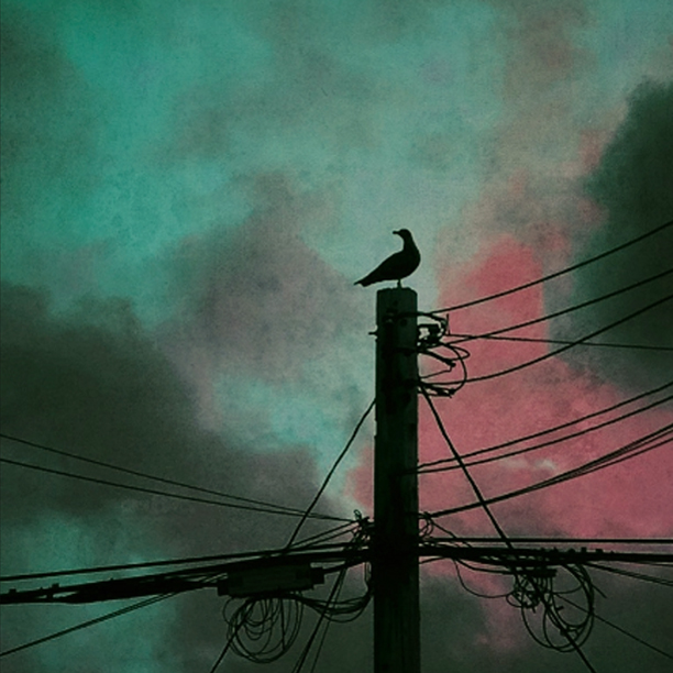Bird on a Wire.jpg
