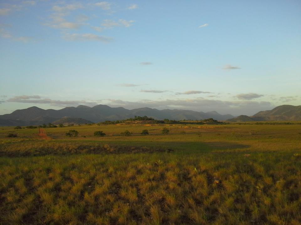 savannah landscape.jpg