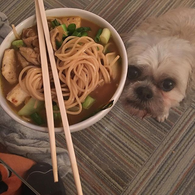 First time making tofu ramen tonight with @windhorstr suggestion. And with my Sous Chef of course. #ramen #tofu #vegan #dog #dogsofinsta #dogs #dogsofinstgram #food #nutrition #souschef #chef ##chopsticks #food #nutrition #gainz #bowl #coachbert #thesweatlife #getinmybelly