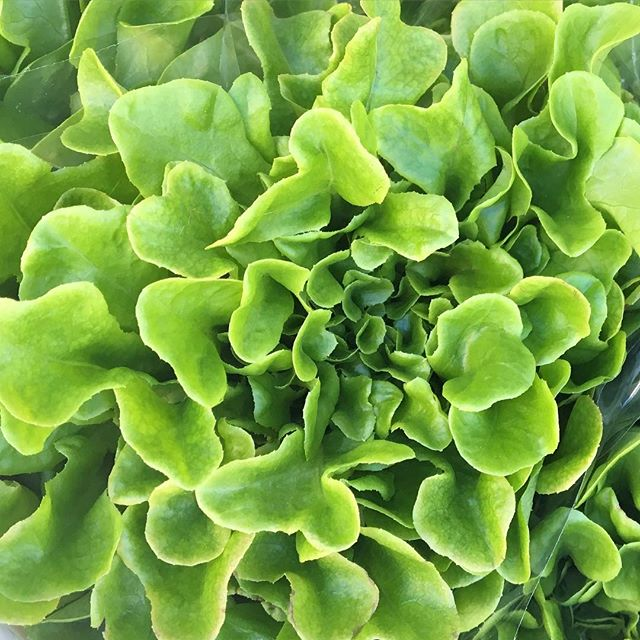 💚 hooked on watercress, tastes sooo gooood. #fresh #vitaminK #delicious #farmersmarket #salad