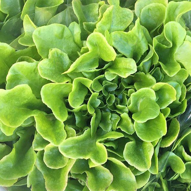 💚 hooked on watercress, tastes sooo gooood. #fresh #vitaminK #delicious #farmersmarket #salad