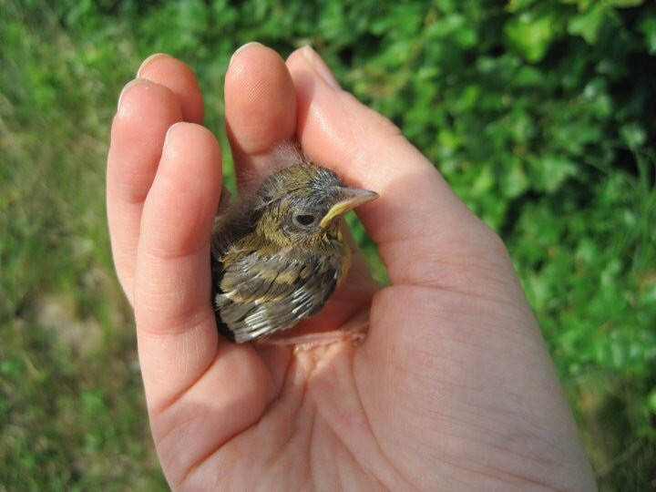 Finding baby birds in the road and helping to move them to safety.