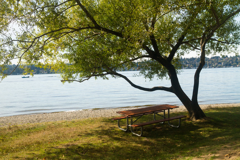 Shady spot by Lake Washington