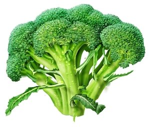 broccoli-alone.jpg
