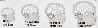 Children have thinner skulls which allow for deeper penetration of radio frequency radiation than adults