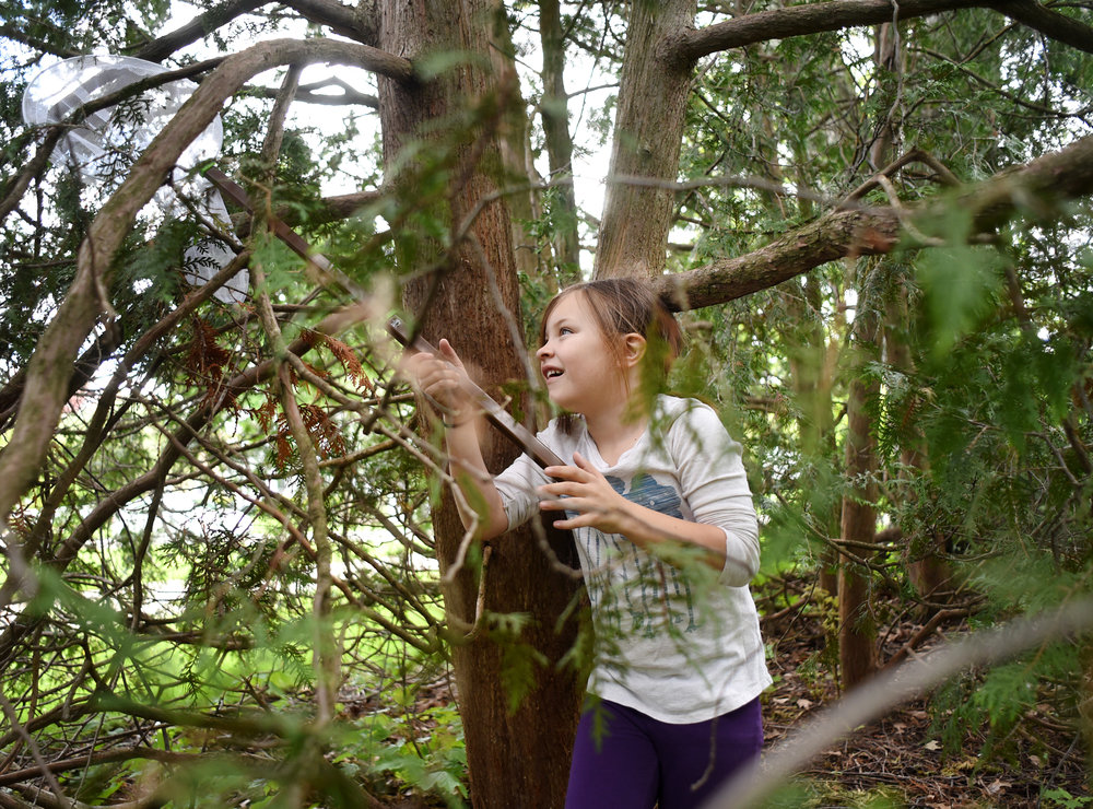 Alyssa Wells, 7, plays in her neighbor's pine tree with a butterfly net May 12, 2016.