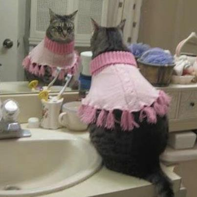 Our favorite Caption from our Facebook Caption contest:   Ha Ha look at that ideeeot!!  What kind of kitty wears pink?!?!   Wait……