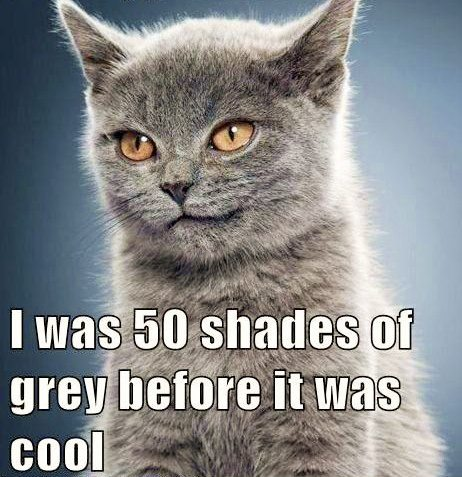 I am too sexy for my fur!