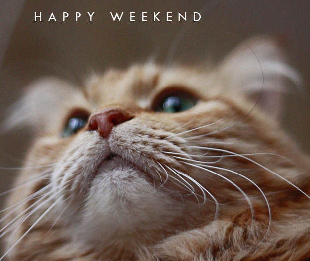 Happy (Almost) Weekend!